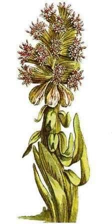 Heilpflanzenlexikon - farbige abbildungen und beschreibungen der 247